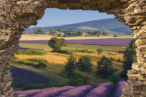 tuinposter doorkijk rots lavendel
