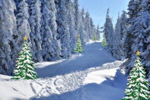 Winterlandschap bospad in sneeuw met Kerstbomen