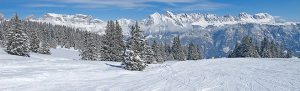 Panorama winterlandschap met bomen