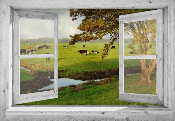 tuinposter 95x130 cm Openslaand wit venster: koeien