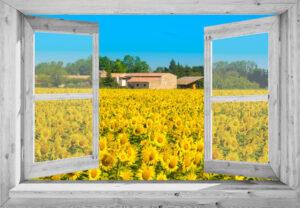 Openslaand wit venster: Zonnebloemenveld