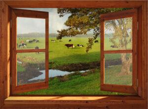 95x130 cm Openslaand bruin venster: koeien