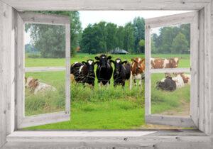 Buitencanvas op frame 100x70 cm - eigen foto in doorkijk