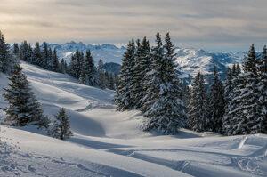 Sfeervol winterlandschap bomen